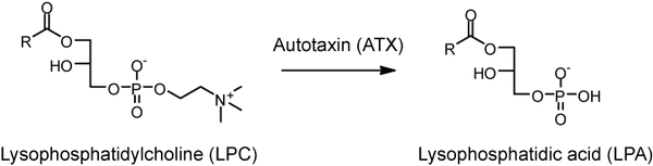 Production of LPA by Autotaxin