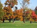 Autumn Grove in OCTC.JPG