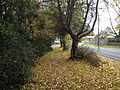 Autumn Leaves in Olinda, Victoria, Australia (2).JPG