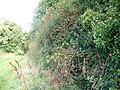 Autumn hedgerow, Bowerchalke - geograph.org.uk - 1014714.jpg