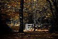 Autumn in the Great Wood (3030595444).jpg