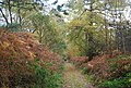 Autumnal colours by the Wealdway, Five Hundred Acre Wood - geograph.org.uk - 1584995.jpg