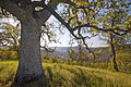 BLM Winter Bucket List -14- Cache Creek Natural Area, California, for Eagle Hikes (15599189923).jpg