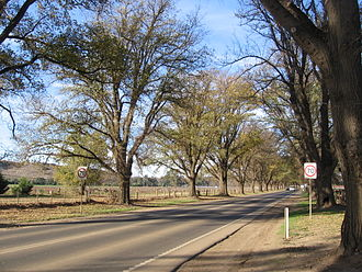 Avenue of honour - The Avenue of Honour in Bacchus Marsh.
