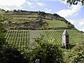 Bacharach vineyard Rhine Valley Germany.jpg