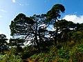 Back Again - panoramio (1).jpg