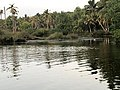 Backwaters in River Neyyar.jpg