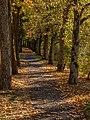Bamberg Hain Linden 110263.jpg