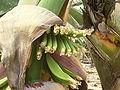 Banana plantation (Los Sauces) 07 ies.jpg