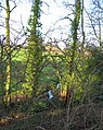 Band of woodland and stream, Bradley Lane - geograph.org.uk - 330175.jpg