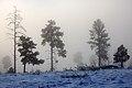 Bandelier - Fog (5291948744).jpg