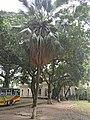 Bangla Academy premises.jpg