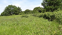 Banstead Downs 3.JPG
