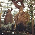 Baobab and Bottle Tree Garden, Flower Dome, Gardens by the Bay, Singapore - 20120628-02.jpg