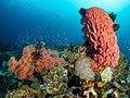 Barrel sponge (27865354839).jpg