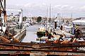 Bassin des Chalutiers du port de La Rochelle (5).JPG