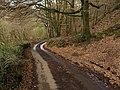 Beadon Lane - geograph.org.uk - 1252346.jpg