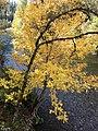 Beautiful Fall Tree (38859013761).jpg