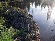 Beaver dam Jämtland