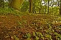 Beechwood specialities - geograph.org.uk - 1341666.jpg