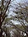 Beehives on road Karnataka 0676 03.jpg