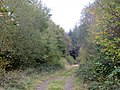 Berrydown Woods - Oct 2014 - panoramio.jpg