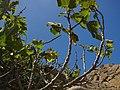 Betancuria, 35637, Las Palmas, Spain - panoramio (186).jpg