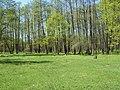 Bezhitskiy rayon, Bryansk, Bryanskaya oblast', Russia - panoramio (156).jpg