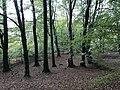 Bickham Wood 2 MRD.jpg