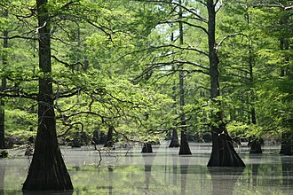Big Lake National Wildlife Refuge - The refuge features old-growth bald cypress forests.