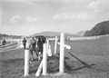 Bild von der Springkonkurrenz der Kavallerie Rekrutenschule Bern - CH-BAR - 3239799.tif