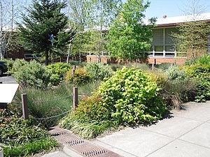 Blue-Green Cities - A photograph of a bioretention system, or rain garden, in Portland, Oregon, US.