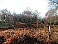 Birch Wood - geograph.org.uk - 342353.jpg