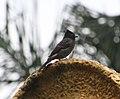 Bird 3 (30522284712).jpg