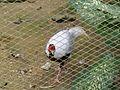 Bird Park in Kuala Lumpur (Malaysia) (10).jpg