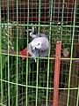 Bird at Geumgang Migratory Bird Observatory, South Korea (2).jpg