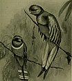 Bird lore (1914) (14753432464).jpg