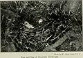 Bird notes (1922) (14568944860).jpg