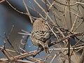 Bird park 3311.jpg