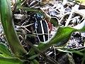 Black ^ white beetle - panoramio.jpg