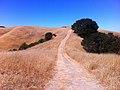Black Oak Trail, Briones Regional Park, CA - panoramio.jpg
