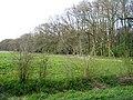 Black Wood - geograph.org.uk - 1803586.jpg
