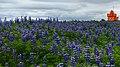 Blue (44100315562).jpg