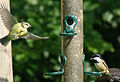 Blue Tit and Coal Tit.jpg