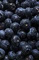 Blueberry (4314662576).jpg