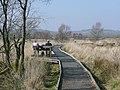 Boardwalk over the Bog of Tregaron, Ceredigion - geograph.org.uk - 1215257.jpg
