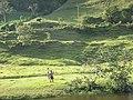 Bocono, Trujillo, Venezuela - panoramio (2).jpg