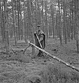 Bosbewerking, arbeiders, boomstammen, gereedschappen, Bestanddeelnr 251-7401.jpg