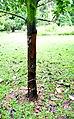 Botanic garden limbe59.jpg