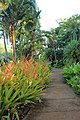 Botanical Gardens Kauai, Hawaii - panoramio (4).jpg